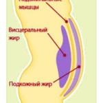 висцеральный жир1